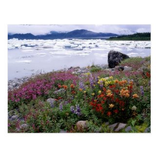 Carte Postale Pinceau, de loup, Fireweed. Icebergs Russell