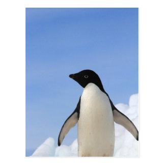 Carte Postale Pingouin d'Adelie