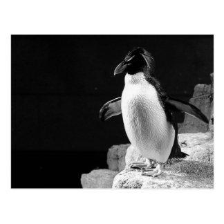 Carte Postale Pingouin dans la photo noire et blanche de