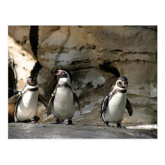 Carte Postale Pingouin de Humboldt