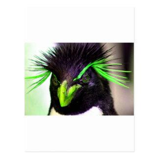 Carte Postale Pingouin de Rockhopper de chaux