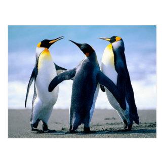 Carte Postale Pingouins
