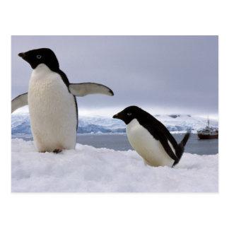 Carte Postale Pingouins Antarctique d'Adelie de paires