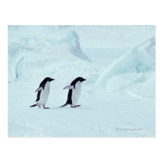 Carte Postale Pingouins d'Adelie, Antarctique