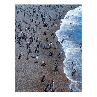 Carte Postale Pingouins de Humboldt à la plage