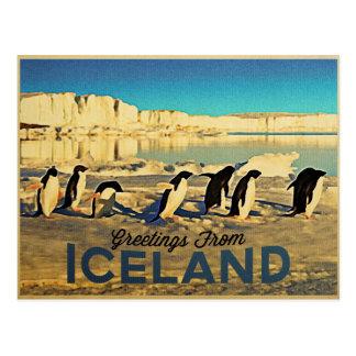 Carte Postale Pingouins de l'Islande