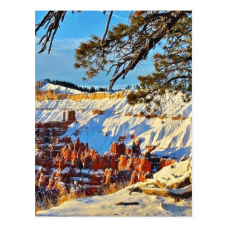 Carte Postale Pins Utah de neige d'hiver de canyon