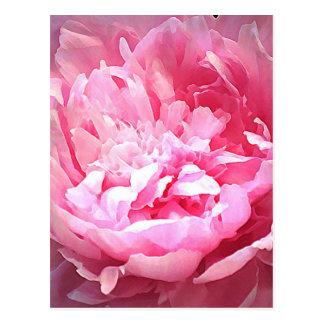Carte Postale Pivoine rose hachée