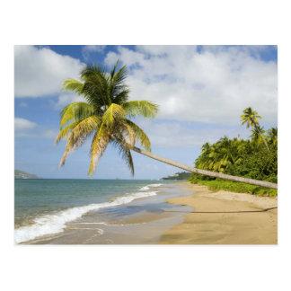 Carte Postale Plage de verger de noix de coco à la baie de
