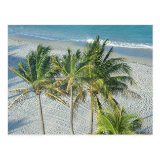 Carte Postale Plage et palmiers à Hollywood, FL