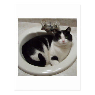 Carte Postale Plaisir d'amoureux de les chats