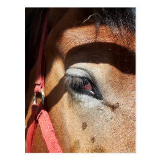 Carte Postale Plan rapproché de cheval à l'Exposition
