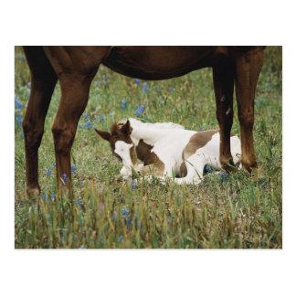 Carte Postale Plan rapproché de cheval et de colt de bébé