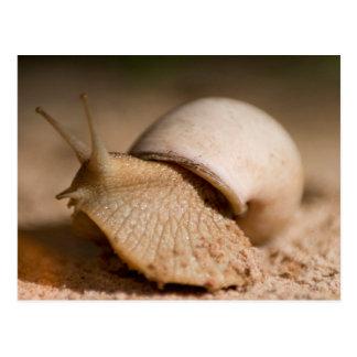 Carte Postale Plan rapproché d'escargot, appartements d'USAngu,