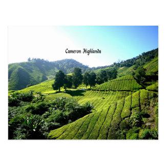 Carte Postale Plantation de thé, montagnes de Cameron, Malaisie