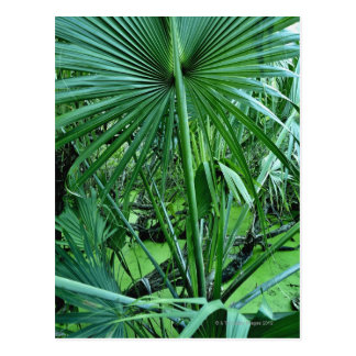 Carte Postale Plantes tropicales dans l'étang de sel