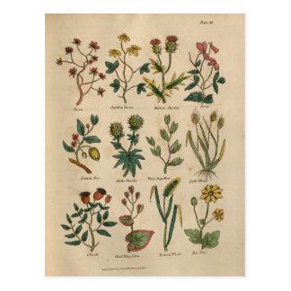 Carte Postale Plat des plantes