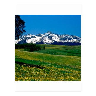 Carte Postale Pleine floraison San Juan Ains le Colorado de parc