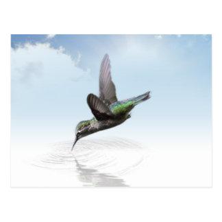 Carte Postale Plongée de colibri dans l'illustration de l'eau