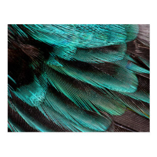 Carte Postale Plumes bleues de couvert d'aile
