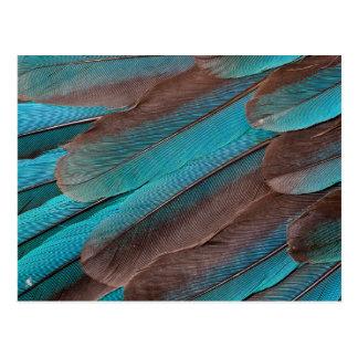 Carte Postale Plumes d'aile de martin-pêcheur