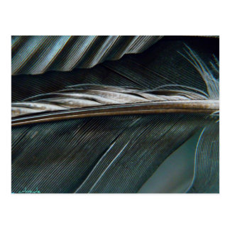 Carte Postale plumes noires et blanches