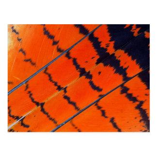 Carte Postale Plumes oranges et noires de cacatoès