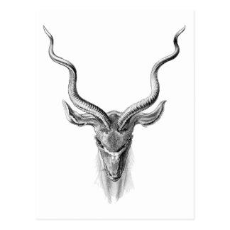 Carte Postale Plus grand Kudu