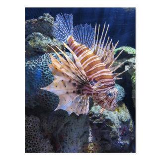 Carte Postale Poissons de lion, aquarium d'aventure