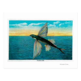 Carte Postale Poissons de vol à l'île de Catalina