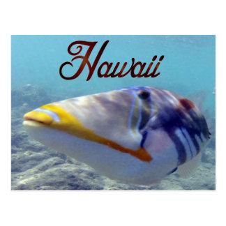 Carte Postale Poissons d'état d'Hawaï - Humuhumunukunukuapua'a