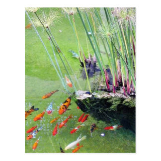 Carte Postale Poissons rouges