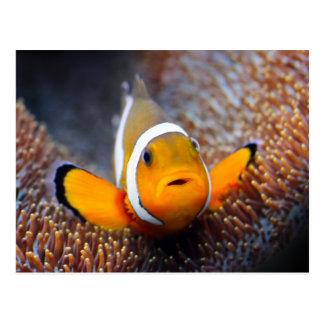 Carte Postale Poissons tropicaux de récif - Clownfish