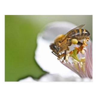 Carte Postale Pollen and bee