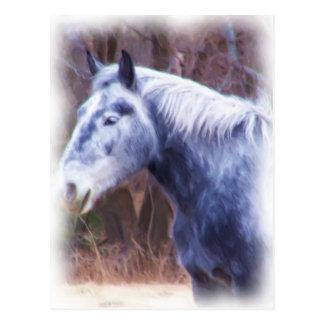 Carte Postale poney