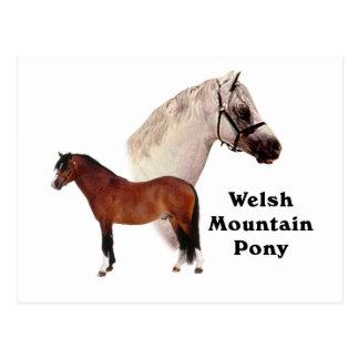 Carte Postale Poney de montagne de Gallois
