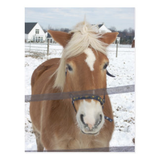 Carte Postale Poney en hiver