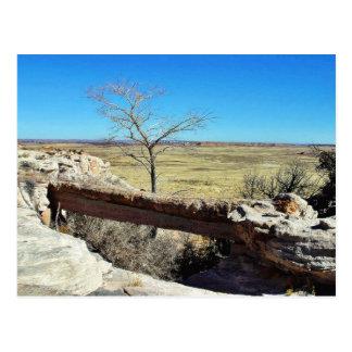 Carte Postale Pont en agate au parc naturel de forêt de Petried