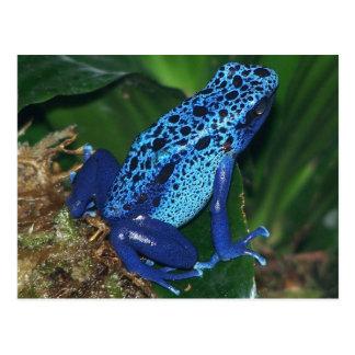 Carte Postale Portrait bleu de grenouille de flèche de poison