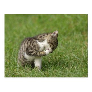 Carte Postale Portrait de chat