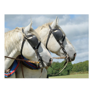 Carte Postale Portrait de cheval de trait