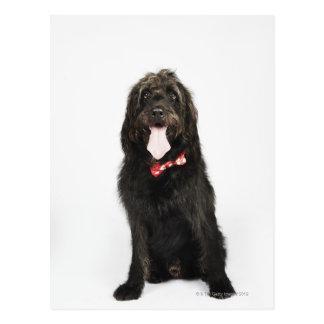 Carte Postale Portrait de chien de Labradoodle
