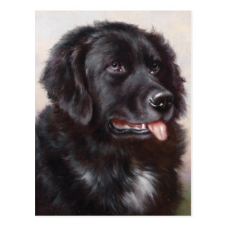 Carte Postale Portrait de chien de Terre-Neuve