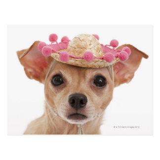 Carte Postale Portrait de petit chien dans le sombrero