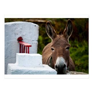 Carte Postale Portrait d'un âne en Irlande
