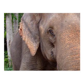 Carte Postale Portrait d'un éléphant