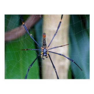 Carte Postale Postcard Nature - Blue Legged Spider, Singapore