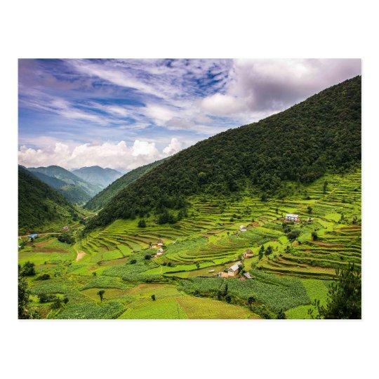 Carte Postale Postcard Paddy fields of Nepal
