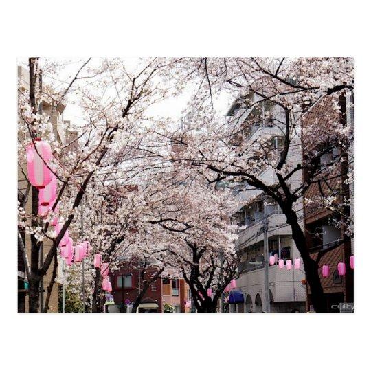Carte Postale Postcard Sakura in the Tokyo Cherry Blossom, Japan