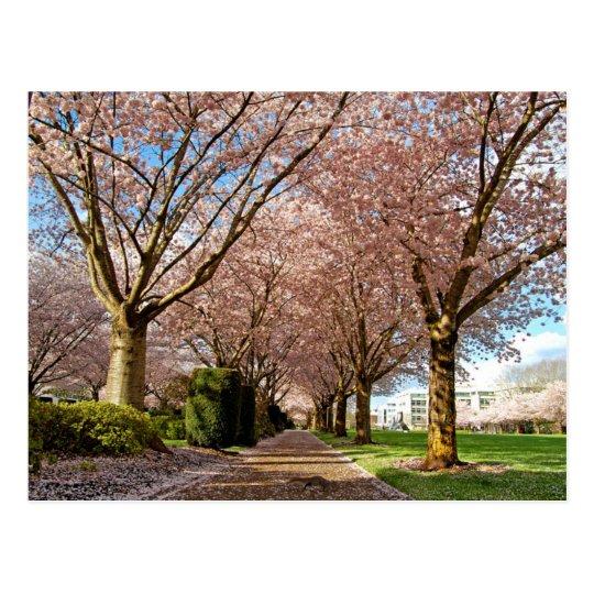 Carte Postale Postcard Salem Cherry Blossoms & Squirrel Oregon